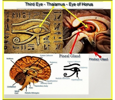 A comparison of a cross section of the human brain and the eye of Ra symbol from ancient Egypt. The design is very similar showing that this eye was really used to symbolize an inner spiritual vision given by the pineal gland.
